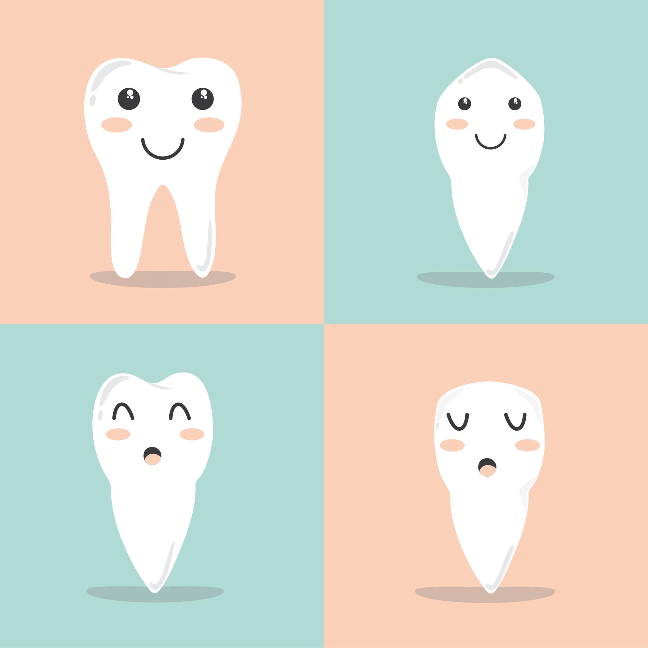 illustration de divers types de dents